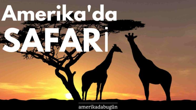 Amerika hayvanat bahçesi safari
