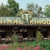 Disney's Animal Kingdom  Disney World gibi büyük bir alana yayılmış eğlence parkı içerisinde bir çok aktiviteyi kaçırabilir hatta unutabilirsiniz. ANcak içerisinde 250'den fazla çeşitte ve 1,700'den fazla hayvanın yaşadığı Animal Kingdom, Disney World'e bir kez gittiğinizde asla uğramadan dönemeyeceğiniz bir yer. Aynı zamanda dünyanın en büyük hayvan parkı olan Animal Kingdom içerisinde isterseniz araçlı safari turlarına katılabilir, isterseniz ormanlık alan içerisinde trekking yapabilirsiniz. Tüm bunlara ek olarak DinoLand'i de görmek isteyebilirsiniz.