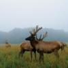 Lee G. Simmons Conservation Park and Wildlife Safari  Parkın web-sitesi: http://www.wildlifesafaripark.com/  Adres: 16406 292 Street, Ashland, NE 68003  Telefon: (402) 944-WILD (402-944-9453)