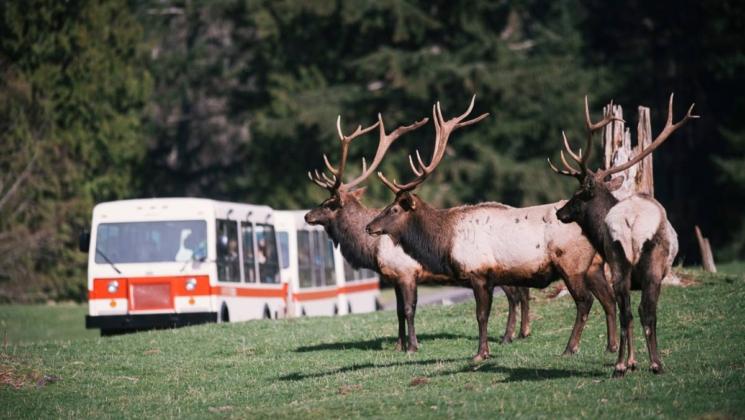 Northwest Trek Wildlife Park  Bu parkı diğerlerinden ayıran temel özellik arabalarla gezilmiyor oluşu. Park içerisine kurulmuş bir tramvayla, toplamda 50 dakika süren ve rehber anlatımıyla süslenen bir tur atılıyor. Ancak buna ek olarak insanların tramvaydan inmesi ve hayvanlarla gözetim altında bire bir iletişim kurması isteniyor. Açık olduğu zamanlar içinse aramanızda fayda var.