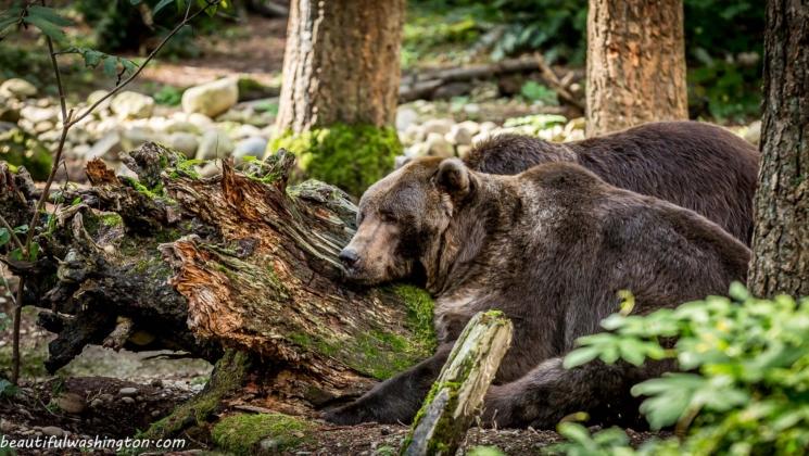 Northwest Trek Wildlife Park  Parkın web-sitesi: http://www.nwtrek.org/  Adres: 11610 Trek Drive East, Eatonville, WA 98328  Telefon: 360.832.6117
