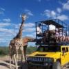 Out of Africa Wildlife Park  Flagstaff  - Phoenix yolunun yaklaşık olarak ortalarındayken uğayabileceğiniz Out of Africa, size çok sayıda etkinlik ve eğlence sunuyor. Bir kaplanın yüzüşünü izleyip, güvenli bir şekilde bir onu beslemek istemez misiniz? Ya da 45 dakikalık bir otobüs turuyla zebralarla ve antiloplarla burun buruna gelmek?