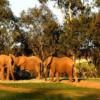 San Diego Zoo Safari Park  Parkın web-sitesi: http://www.sdzsafaripark.org/  Adres: 15500 San Pasqual Valley Road, Escondido, CA 92027-7017  Telefon: 760-747-8702