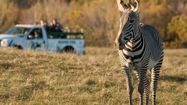The Wilds  Söz konusu vahşi yaşam olduğundan Ohio akla gelen ilk yerlerden bir tanesi olmayabilir. Ancak burası ülkedeki en iyi parklardan bir tanesi. Çok geniş bir alan üzerine kurulu parkın içerisinde vahşi atların, çitaların ve develerin rahatça dolaşabilecekleri boşluk bulunuyor. Parkı diğerlerinden ayıran bir diğer özellikse içerisinde atlarla da gezinti turları yapılabilmesi.