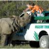 The Wilds  Parkın web-sitesi: https://thewilds.columbuszoo.org/  Adres: 14000 International Road, Cumberland, OH 43732  Telefon: (740) 638-5030