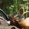 Virginia Safari Park  Parkın web-sitesi: http://www.virginiasafaripark.com/  Adresi: 229 Safari Lane, Natural Bridge, VA 24578  Telefon: (540) 291-3205