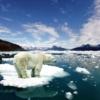 Yale Üniversitesi'ne bağlı Gallup/Clearvision Poll'un yaptığı araştırmaya göre, Amerikalılar'ın %30'u, küresel ısınmanın yalnızcaki doğadaki değişimler sonucu ortaya çıktığına inanıyor. Yani insan etkisinin hiç olmadığını düşünüyorlar.