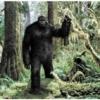 Public Policy Polling'in araştırmasına göre, Amerikalılar'ın üçte biri Kocaayak'ın (Bigfoot) yaşadığına inanıyor.