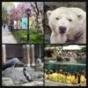 3.Central Park Hayvanat Bahçesi  Kutup ayısından sürüngenlere kadar 130 farklı türde hayvanı bünyesinde barındıran bu hayvanat bahçesi, hayvanların doğal ortamlarına en yakın yaşama alanlarına sahip olabilmeleri için titizlikte dizayn edilmiş. Central Park Hayvanat Bahçesi hayvan türlerine göre ayırdığı birçok özel bölümden oluşmaktadır. Bunların içinde en çok ilgi çeken üç alan, Kutup ayılarının bulunduğu Polar Circle (Kutup Dairesi), birçok sürüngen ve kuşun bulunduğu The Rain Forest (Yağmur Ormanı) ve leopar, denizaslanı, kırmızı panda gibi hayvanları görebileceğiniz The Temperate Territory'dir (Ilıman Bölge).