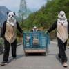 Wolong Koruma Alanı bakıcıları 'doğa eğitimini' tamamlamak üzere olan Hua Jiao'yu (Zarif Güzellik) sağlık kontrolüne götürüyor. Doğal ortam, kızıl pandalara, sülünlere, perçemli geyiklere ve panda korumacılığından yarar gören türlere de koruma sağlıyor.