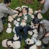 Personelin Baba Panda adını verdiği Zhang Hemin, Bifengxia Üssü'nde 2015 yılında doğan yavrularla birlikte poz veriyor.