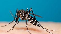 California'da Doğaya 20 Milyon Sivrisinek Bırakılacak!