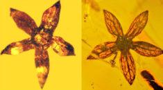 100 Milyon Yıllık Bitki Mükemmel Korunmuş Halde Bulundu