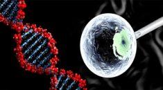 İnsan embriyosu etkin bir şekilde ilk kez ABD'de değiştirildi