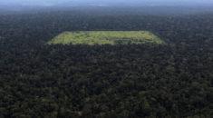 Amazon'da dünyanın en büyük ağaçlandırma projesi