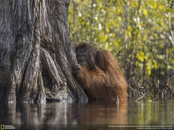 National Geographic'ten 2017'nin En İyi Fotoğrafları
